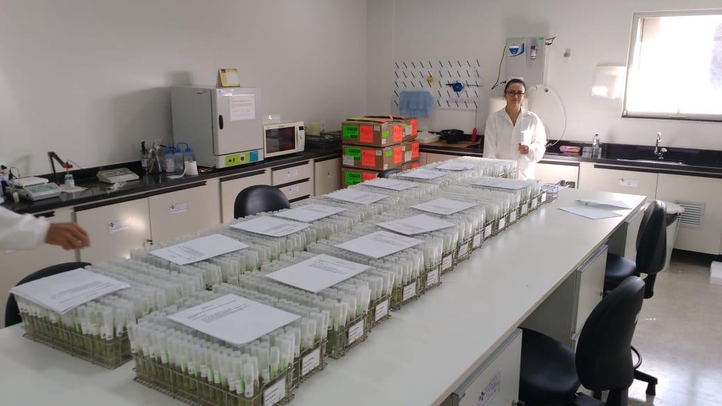 Acervo Embrapa - Chega à Embrapa a sexta remessa da coleção de batatas do CIP