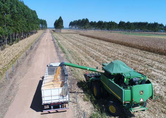 Gabriel Faria - Integrar lavoura, pecuária e floresta diversifica investimentos e reduz riscos financeiros ao produtor