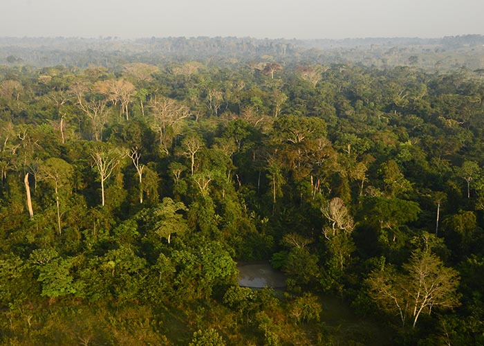 carbonio a sul la amazzonica riuscire proteggere biodiversità potrebbe conservazione La non focalizzata Itwq4v8