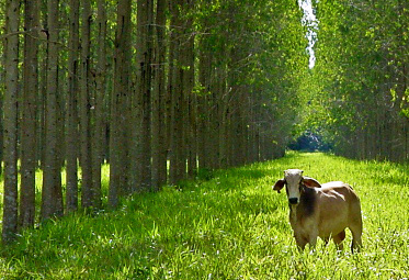 Integrated Crop Livestock Forest Systems
