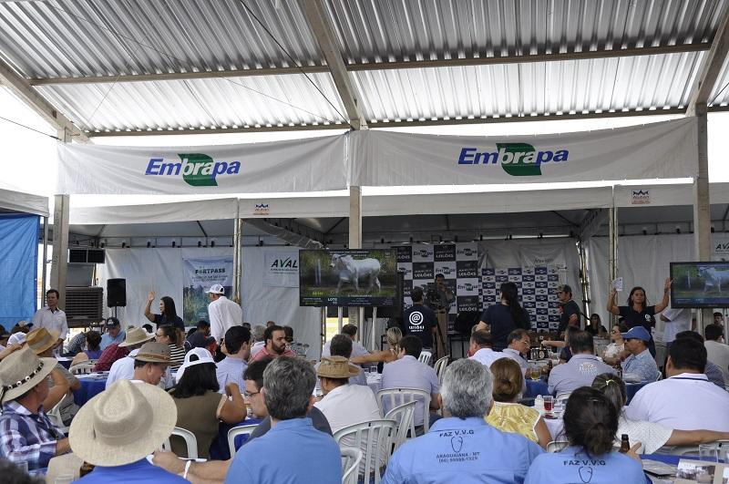 Breno Lobato - Evento recebeu cerca de 300 pessoas e democratizou o melhor da genética Nelore e Tabapuã do Teste de Desempenho de Touros Jovens