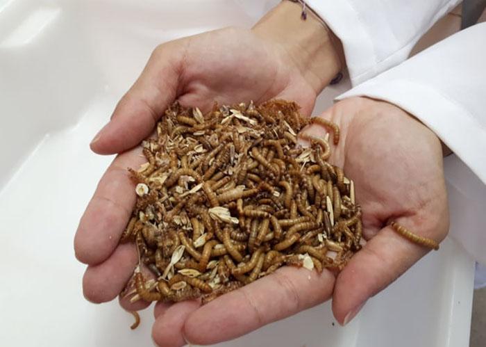Resultado de imagem para Pesquisa internacional indica insetos para alimentar peixes e aves