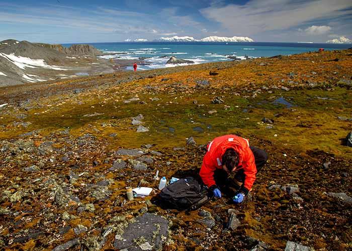 Projeto MycoAntar - Pesquisador coleta amostras de gramíneas na Antártica.