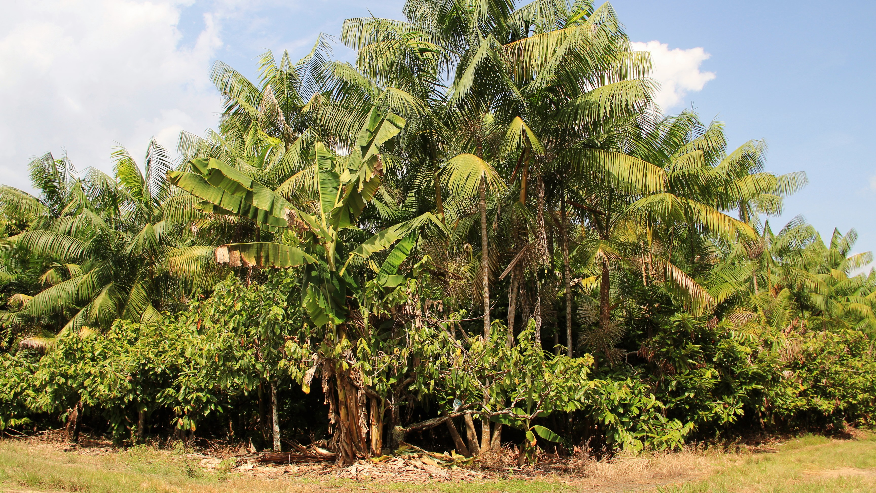 Ronaldo Rosa - O sistema agroflorestal (SAF) é uma das tecnologias estimuladas pelo projeto.