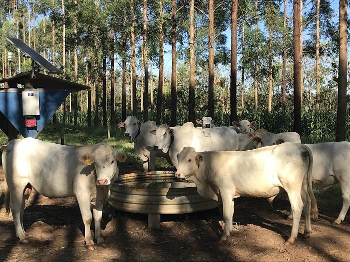 Ana Maio - Consumo de água por animais pode ser calculado pelo produtor