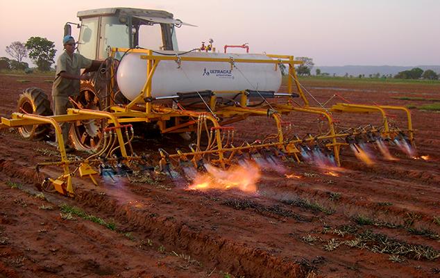 Marcos Roberto Silva - Método de flamejamento para controle de plantas daninhas