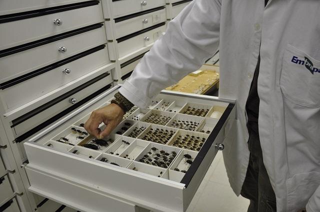 Breno Lobato - Coleção Entomológica da Embrapa Cerrados ganha página na internet