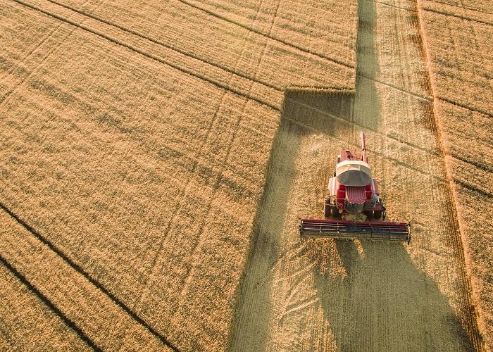 Fabiano Bastos - Produtividade do trigo do Cerrado alcanca seis toneladas por hectare, frente a 2,8 t/ha da média nacional