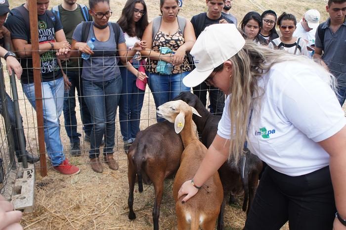 Adilson Nóbrega - Participantes do Dia de Campo acompanham demonstração de aferição de escore corporal em ovinos