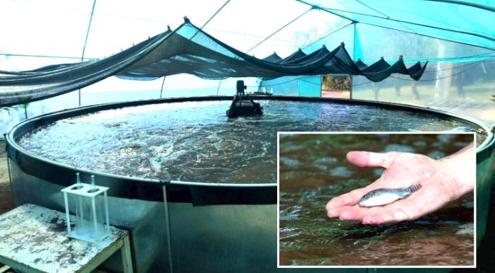 Divulgação JIE Itaipu - Tanque de 80 mil litros do programa da Itaipu, com capacidade de comportar a produção de até 60 mil alevinos