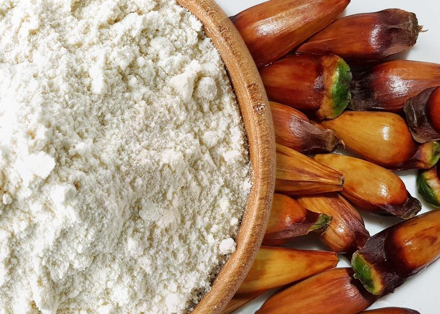 Fernanda Ottoni/iStock/Embrapa Florestas - A farinha do pinhão é alternativa para uso gastronômico e dietas sem glúten