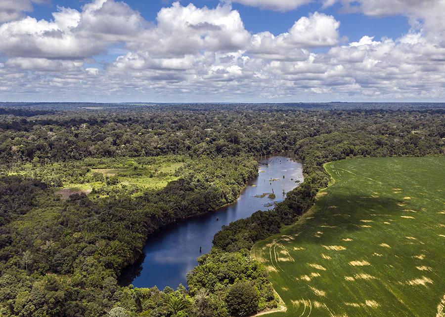 Marizilda_Cruppe - O site traz informações didáticas sobre os biomas tropicais terrestres e marinhos no planeta, a participação dos biomas brasileiros no contexto mundial e a relevância da Amazônia nesse cenário