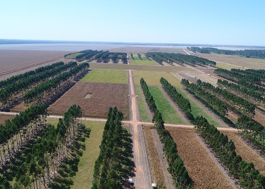 Gabriel Faria - Pesquisa realizada em Sinop (MT mostra perdas de solo, água e nutrientes devido à erosão menores em sistemas de integração lavoura-pecuária-floresta (ILPF)