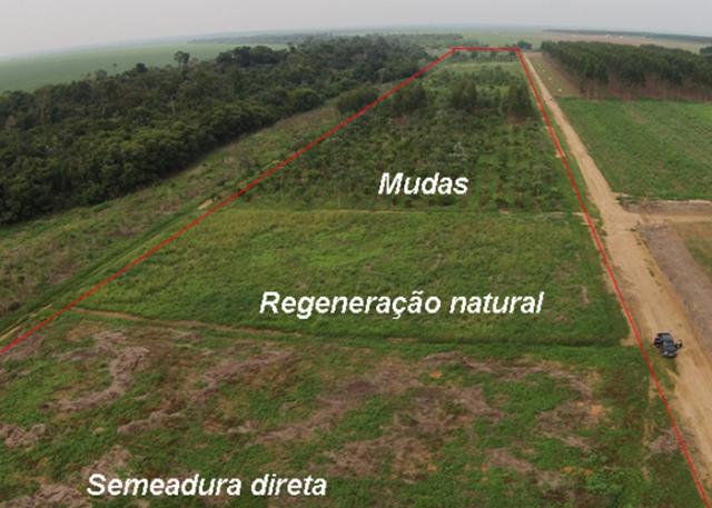 Regeneração natural não é eficiente para restauração de áreas com histórico de agricultura tecnificada